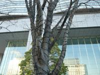 okamoto2011-0111-01-050